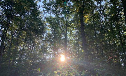 Wie unser Wald 2100 aussehen wird